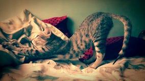 leniwy kot Fotografia Stock