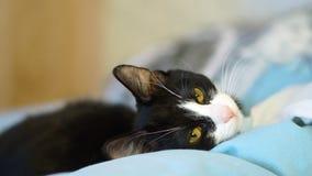 leniwy kot zbiory