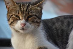 leniwy kot Zdjęcia Royalty Free
