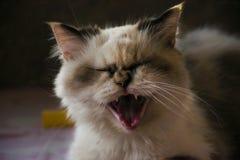 leniwy kot obraz royalty free