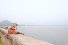 leniwy psa obraz royalty free