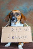 Lennox Rest in Peace Royalty Free Stock Photography