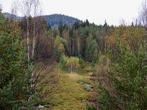 Lenora kärr i Sumava i södra Bohemia Royaltyfria Bilder