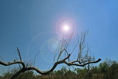 LENS FLARE ADDED TO LANDSCAPE WITH DRY BRANCH. View of bright lens flare added to landscape with dry bare branch against a blue sky royalty free stock photography