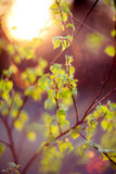 Lens flare nature green Royalty Free Stock Image
