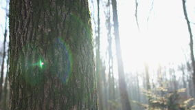 Lens flare from sun shining through trees, snow covered ground, winter, Dolly stock footage