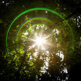 Lens Flare and Sun Starburst Through Trees Stock Photos