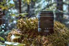 Lens in het hout Royalty-vrije Stock Afbeelding