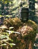 Lens in het hout Stock Afbeelding