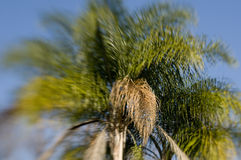 Lensbaby Palm Tree Royalty Free Stock Image