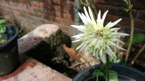 Lense agradável t f da flor clara do dia Imagens de Stock
