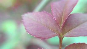 Lense del micro della foglia Fotografie Stock Libere da Diritti