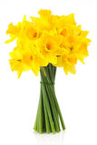 Lent lily (daffodil) 2. Bouquet of yellow lent lily (daffodil) isolated on white background royalty free stock photo