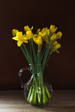 Lent lily daffodil in a glass vase. On old wooden table royalty free stock images
