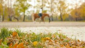 Lent montant un cheval Formation d'équitation clips vidéos