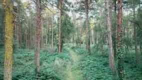 Lentamente andando através da floresta filme
