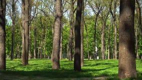 Lentamente deslizando a câmera no parque com árvores video estoque