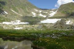 Lentamente eseguire corrente alpina Fotografia Stock