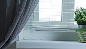 Lentamente resbalando en la ventana con las persianas y fijando en las plantas verdes en el travesaño de la ventana, introducción almacen de video