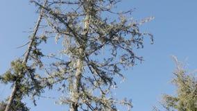 Lentamente zumbindo dentro na parte superior de uma árvore video estoque