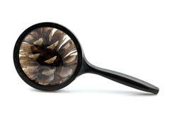 Lente d'ingrandimento con il cono del pino Immagini Stock