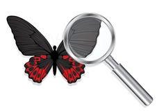 Lente d'ingrandimento con la farfalla Immagine Stock Libera da Diritti