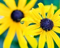 Lente da gota de orvalho Foto de Stock Royalty Free