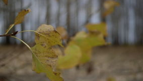 Lente di Leica video d archivio