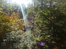 A lente do feixe de Sun alarga-se nas madeiras imagem de stock royalty free