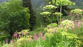 Lente en de zomer van bergweiden de witte en roze bloemen royalty-vrije stock afbeeldingen