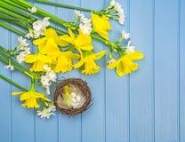 Lente gekleurde bloemen met de decoratie van het vogel` s nest Stock Fotografie