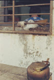 Lente Zuiko do normal de olympus 50mm do filmphotography de Hangzhou Zhejiang da porcelana do estilo de vida Fotos de Stock