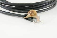 Lentement l'Internet aiment le concept d'escargot Photographie stock