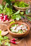 Lenten spring vegetable salad from cucumber, radish, greens. And oil in a wooden plate Royalty Free Stock Image
