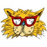 Lentes Cat Face Foto de archivo libre de regalías
