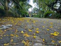 Lentetijd in Guwahati Royalty-vrije Stock Foto