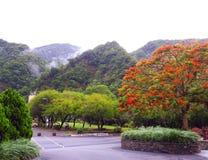 Lentetijd op de berg Taiwan stock foto