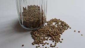 lenticchia verde Immagini Stock