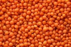 Lenticchie rosse Immagine Stock