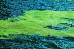 Lenticule flottant sur la surface de l'eau Image stock