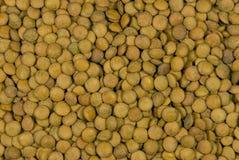 Lentil. Background from lentil grains. Family of the bean stock photos