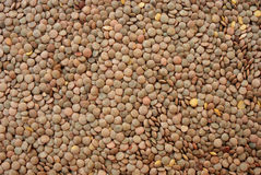 Lentil 15. Lentil vegetable in close up Royalty Free Stock Photography