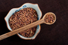 Lentil Royalty Free Stock Photography