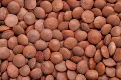 Lentil background Royalty Free Stock Photography