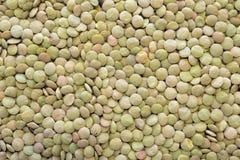 Lentil beans Royalty Free Stock Image
