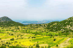 Lentil fields on the island of Lefkada (Greece) Royalty Free Stock Photo