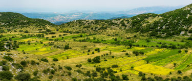 Lentil fields on the island of Lefkada (Greece) Royalty Free Stock Images