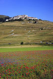 The lentil flowering in Castelluccio di Norcia. Thousands of colors Stock Photo