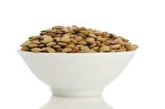 Lentil grain Royalty Free Stock Image