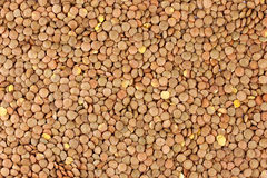 Lentil isolated on white background Royalty Free Stock Photography